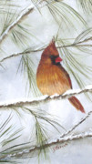 Cardinal In Snow Framed Prints - Female Cardinal In Pine Framed Print by Donna Frasca