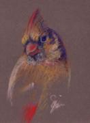 Suzie Majikol-Maier - Female Cardinal