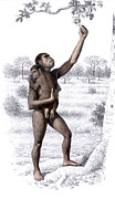 Plucking Framed Prints - Female Homo Habilis Framed Print by Mauricio Anton