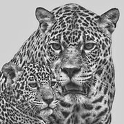 Jaguar Digital Art - Female Jaguar And Cub by Larry Linton