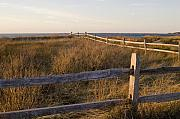 Krauzyk Art - Fence Along the Dunes - Madaket - Nantucket by Henry Krauzyk