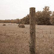 Haybale Photo Prints - Fence and Field Print by Sheila Harnett