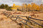 Jefferson Originals - Fence at Kenosha Pass by Adam Pender