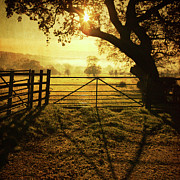 Lens Flare Prints - Fence At Sunset Print by Matthew Fleming