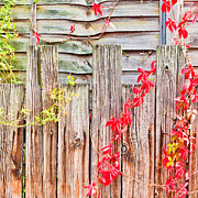 Decaying Prints - Fence background Print by Tom Gowanlock