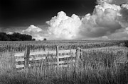 Mark Clifford - Fence. Field. Sky- Kent...