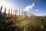 Sand Fences Photos - Fence In A Field by John Short