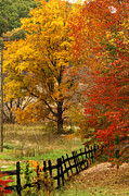 Photos Of Autumn Prints - Fence in autumn Print by Randall Branham