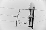 Fence Post Photos - Fence In The Snow by Odd Jeppesen