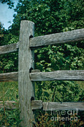 Fence Posts Photos - Fence by Photo Researchers