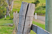 Joanne Kocwin Art - Fence Post by Joanne Kocwin
