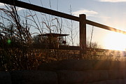 Grill Gate Photos - Fence Sunset by Kayla Nicole