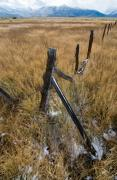 Ranching Art - Fence to Nowhere by Norman  Andrus
