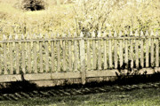 White Picket Fence Framed Prints - Fenced In Framed Print by Bonnie Bruno