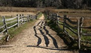 Split Rail Fence Digital Art Framed Prints - Fenced Path Framed Print by Paul McCarthy