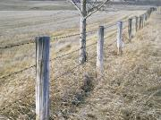 Barbed Wire Fences Acrylic Prints - Fenceline And Cropland In Late Fall Acrylic Print by Darwin Wiggett