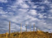 Barbed Wire Fences Acrylic Prints - Fenceline In Pasture With Cumulus Acrylic Print by Darwin Wiggett