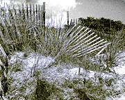 Sand Fences Posters - Fences in Duotone Poster by Anne Ferguson