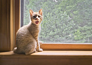 Kitten Photos - Fergus at The Window by Patrick M Lynch