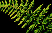 Forest Floor Posters - Fern - Abstract Nature Poster by Thomas Schoeller
