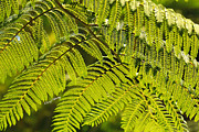 Bathroom Art Prints - Fern 3 Print by Cheryl Young