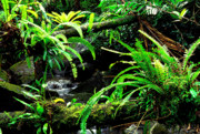 Bromeliads Glass - Fern Custers on Fallen Tree  by Thomas R Fletcher