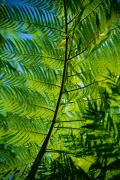 Overhang Photo Metal Prints - Fern Detail Metal Print by Himani - Printscapes