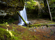 North Idaho Prints - Fern Falls Print by Idaho Scenic Images Linda Lantzy