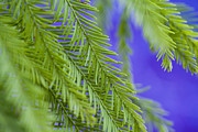 Floral Patterned Framed Prints - Fern in Blue Framed Print by Al Hurley