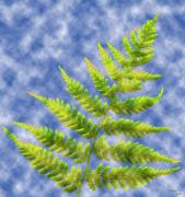 Flora Digital Art Originals - Fern Leaves by Terence Davis