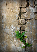Old Wall Prints - Fern Life Print by Perry Webster