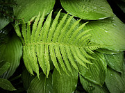 Fern On Top Print by Nafets Nuarb
