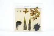 Frond Prints - Fern Specimens Print by Gregory Davies, Medinet Photographics