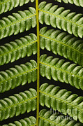 Potted Plant Posters - Fern Tendril Poster by Raul Gonzalez Perez