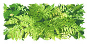 Green Foliage Prints - Fern Vignette Print by JQ Licensing