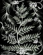 Fern Drawings - Fernberry Frost by Sharon Marcella Marston