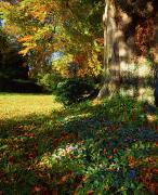 Autumn Leaves Acrylic Prints - Fernhill Gardens, Co Dublin, Ireland Acrylic Print by The Irish Image Collection