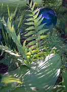 Sandy Collier - Ferns and Glass
