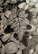 Pencil Sketch Mixed Media Prints - Ferns and Pebbles Print by Sowjanya Sreeram