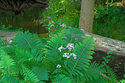 Ferns And Phlox Print by Michael Peychich