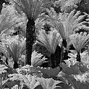 Contrasty Acrylic Prints - Ferns Acrylic Print by Troy Ziel