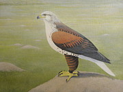 Prairie Dog Drawings - Ferruginous Hawk by Alan Suliber