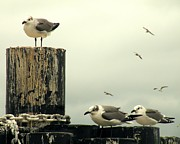 Sea Gulls Prints - Ferry Hypnosis Print by Joe JAKE Pratt