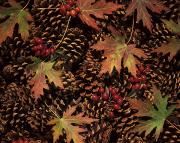 Thanksgiving Art Photos - Festive Leaves and Pinecones by Tomas del Amo - Printscapes