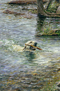Dog Swimming Paintings - Fetch by Doug Kreuger