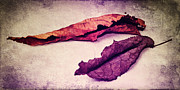 Decaying Mixed Media Prints - Feuilles Dautomne Meets Purple Autumn Print by Angela Doelling AD DESIGN Photo and PhotoArt