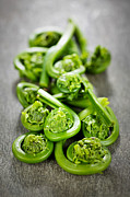 Greens Posters - Fiddleheads Poster by Elena Elisseeva