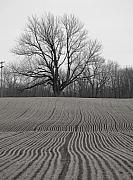 Andrew Kazmierski - Field and Tree