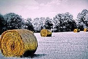 Hay Digital Art - Field of Bales by DJ Florek
