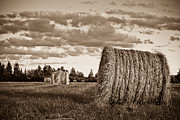 Bales Framed Prints - Field of Bales Framed Print by TB Sojka
